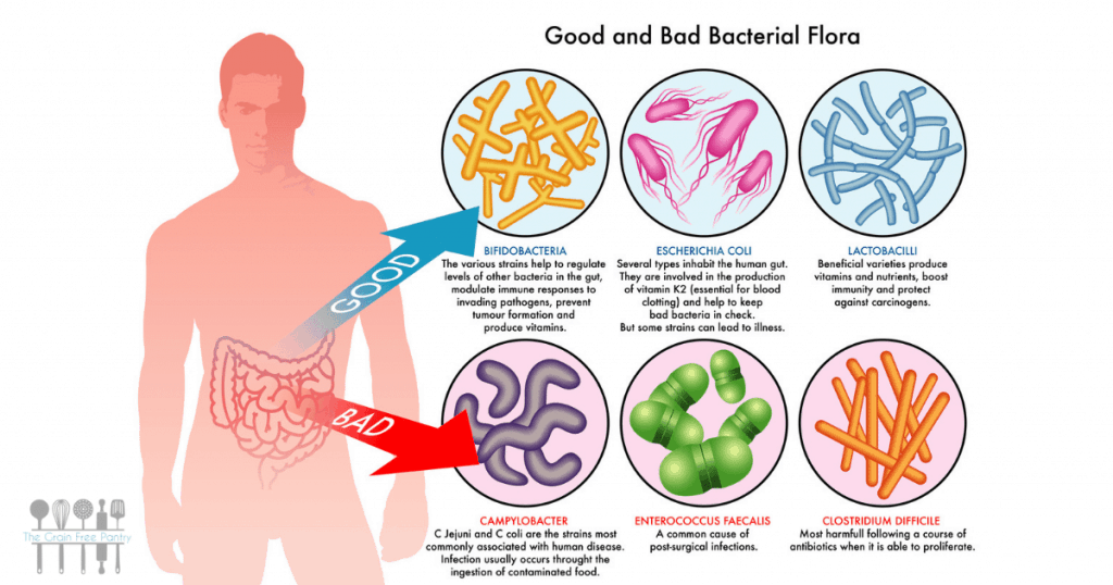 food and gut health